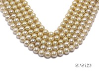 Wholesale 12mm Champagne Round Seashell Pearl String