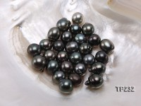 Tahitian Pearl–Top Grade AAA 12X13-13X16mm Natural Black Near Round Pearl