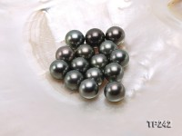 13-13.5mm Black Round Loose Tahitian Pearls